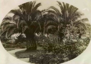 Postcard of the Gardens circa 1915